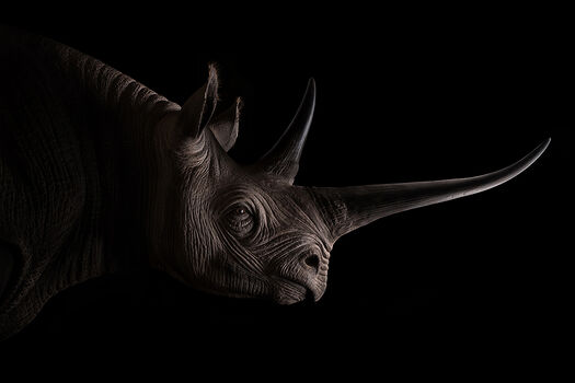 Photo BLACK RHINO - Sarel Marina