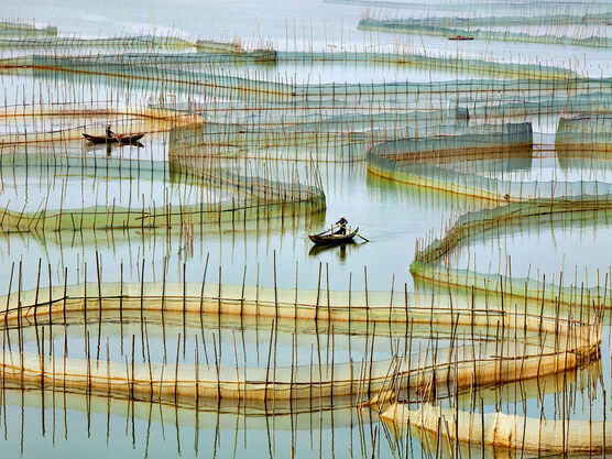 Photo Labyrinth - Thierry Bornier