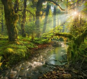 Photo Spirit Garden Queets Rainforest Washington - Marc Adamus