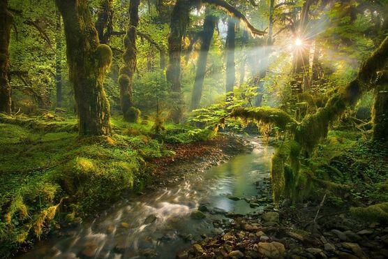 Photo Spirit Garden Queets Rainforest Washington - Marc Adamus