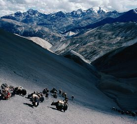 Photo Caravane de yaks de retour au pays - Eric Valli