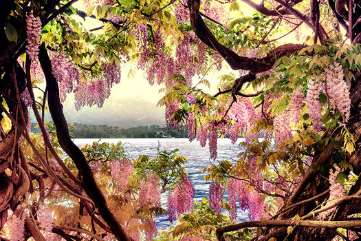 Photo WISTERIA 1 - Bernhard Hartmann