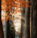Photo FOR YOUR EYES ONLY - Lars Van de goor
