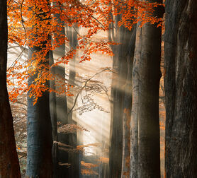 Photo FOR YOUR EYES ONLY - Lars Van de goor