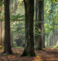 Photo STERRENBOS - Lars Van de goor