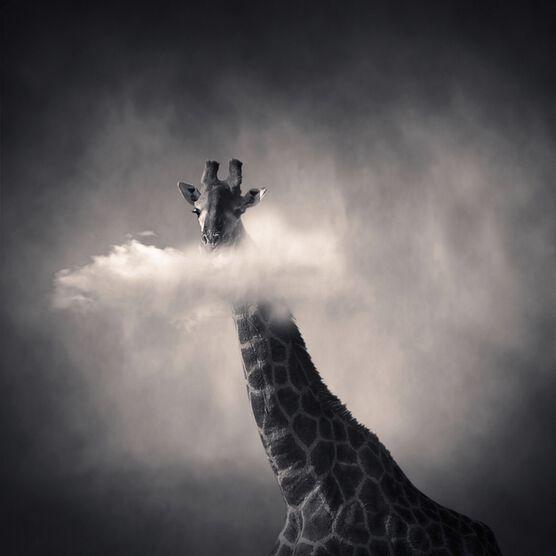 Photo Girafe - Denis Olivier