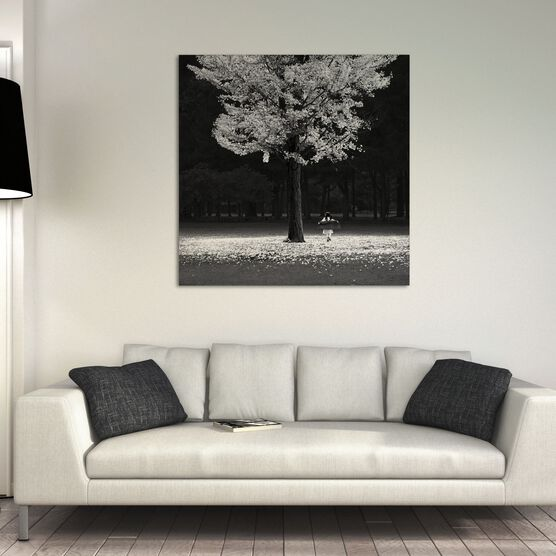 Photo AUTUMN TREE - Jefflin
