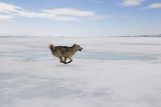 Photo La chasse - Groenland - Luc Hardy
