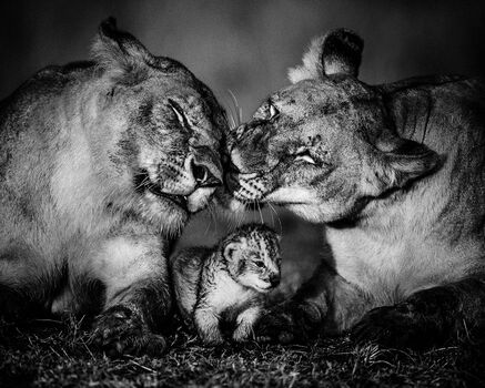 Photo The small one - Laurent Baheux
