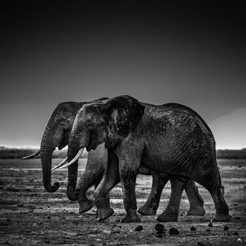 Photo Side by side, Kenya 2015 - Laurent Baheux