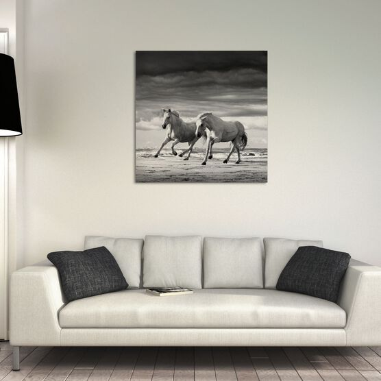 Photo Two stallions playing - Jonathan Chritchley