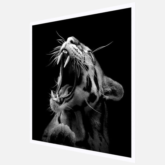 Photo The Clouded Leopard - Lukas Holas
