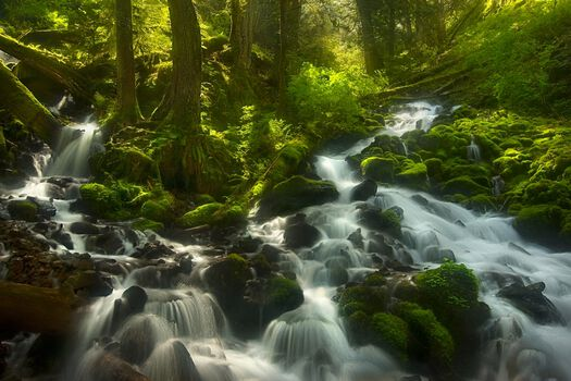 Photo Enchanted Forest Columbia Gorge Oregon - Marc Adamus