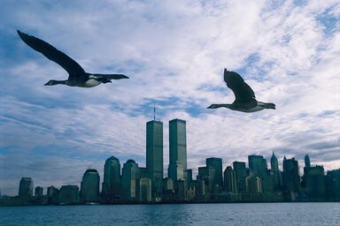 Twin Towers - Le peuple migrateur