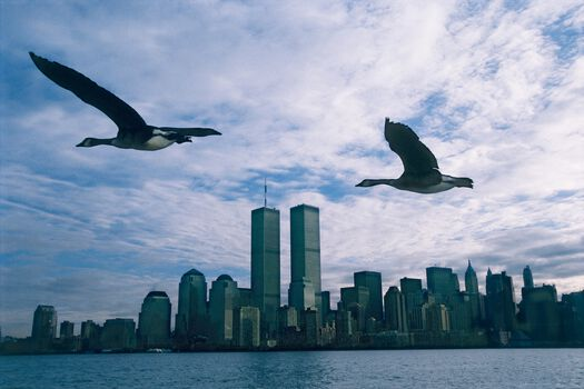 Photo Twin Towers - Le peuple migrateur - Mathieu Simonet