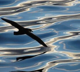 Photo REFLETS MELES - Paul Tixier