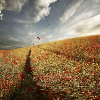 Photo POPPY RED - Christine Ellger