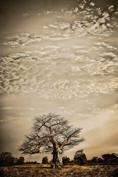 Photo Hierarchy #1 - Klaus Tiedge
