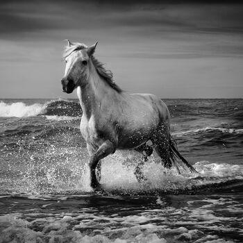 Photo Stallion - Jonathan Chritchley