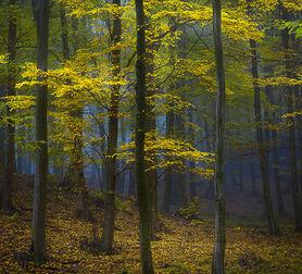 Photo MYSTERIOUS POWER OF THE FOREST - Janek Sedlar
