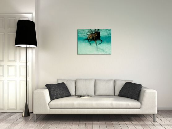 Photo Seahorse I - Kurt Arrigo