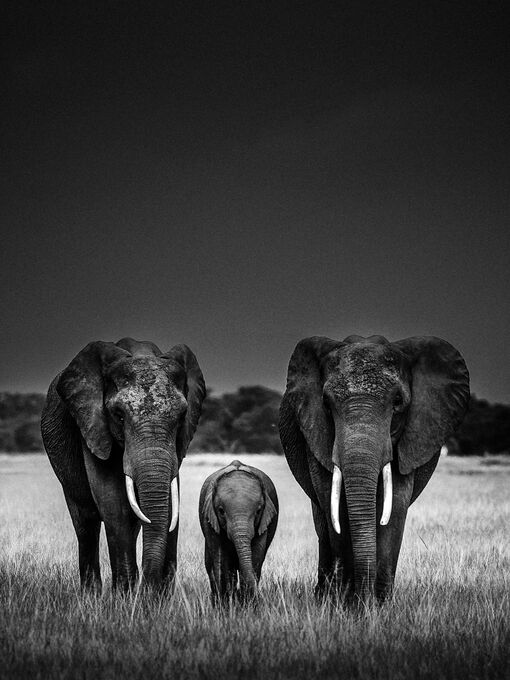 Photo Body Guards - Laurent Baheux