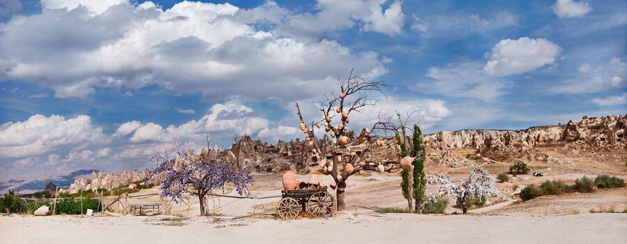 Photo Wishtree - Matthias Barth