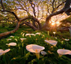 Photo Heaven on Earth California Coast Final - Marc Adamus