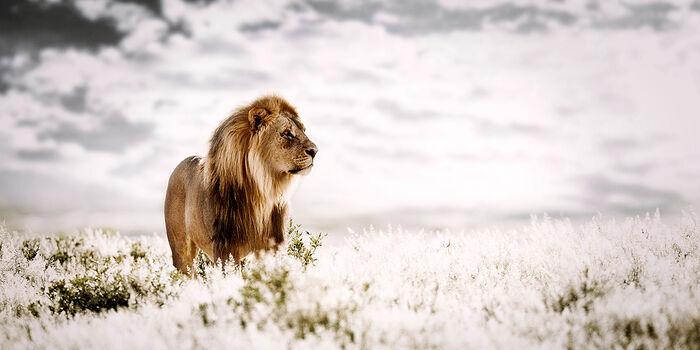 Photo PRIDE OF AFRICA - Klaus Tiedge