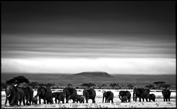 Photo Elephant Trip - Laurent Baheux