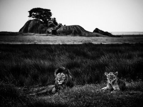 Photo THE ROYAL COUPLE - Laurent Baheux