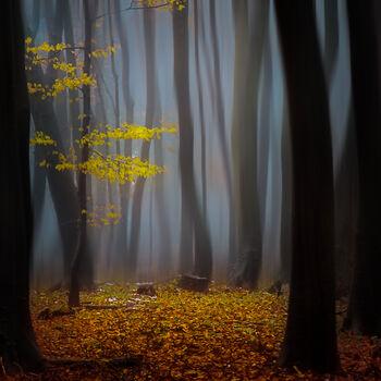 Photo Timeless - Janek Sedlar