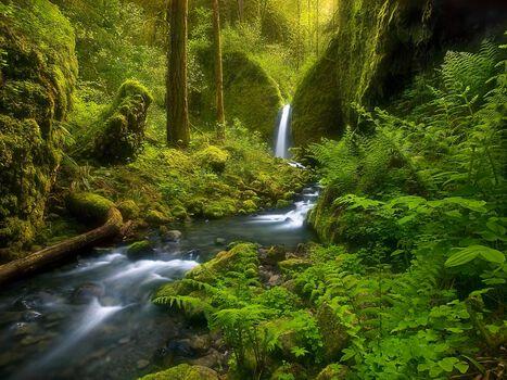 Photo Fairyland Falls Columbia Gorge Oregon - Marc Adamus