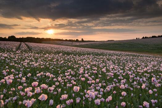 Photo The Medicine Fields - Adam Burton
