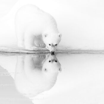 Photo ICE REFLECTIONS - Nolwenn Hadet