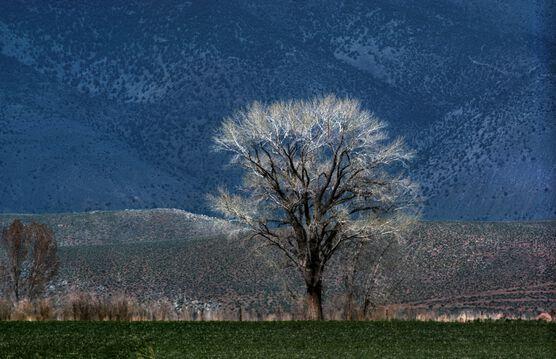 Photo Aspen - Nevada USA - FRANCK HORVAT